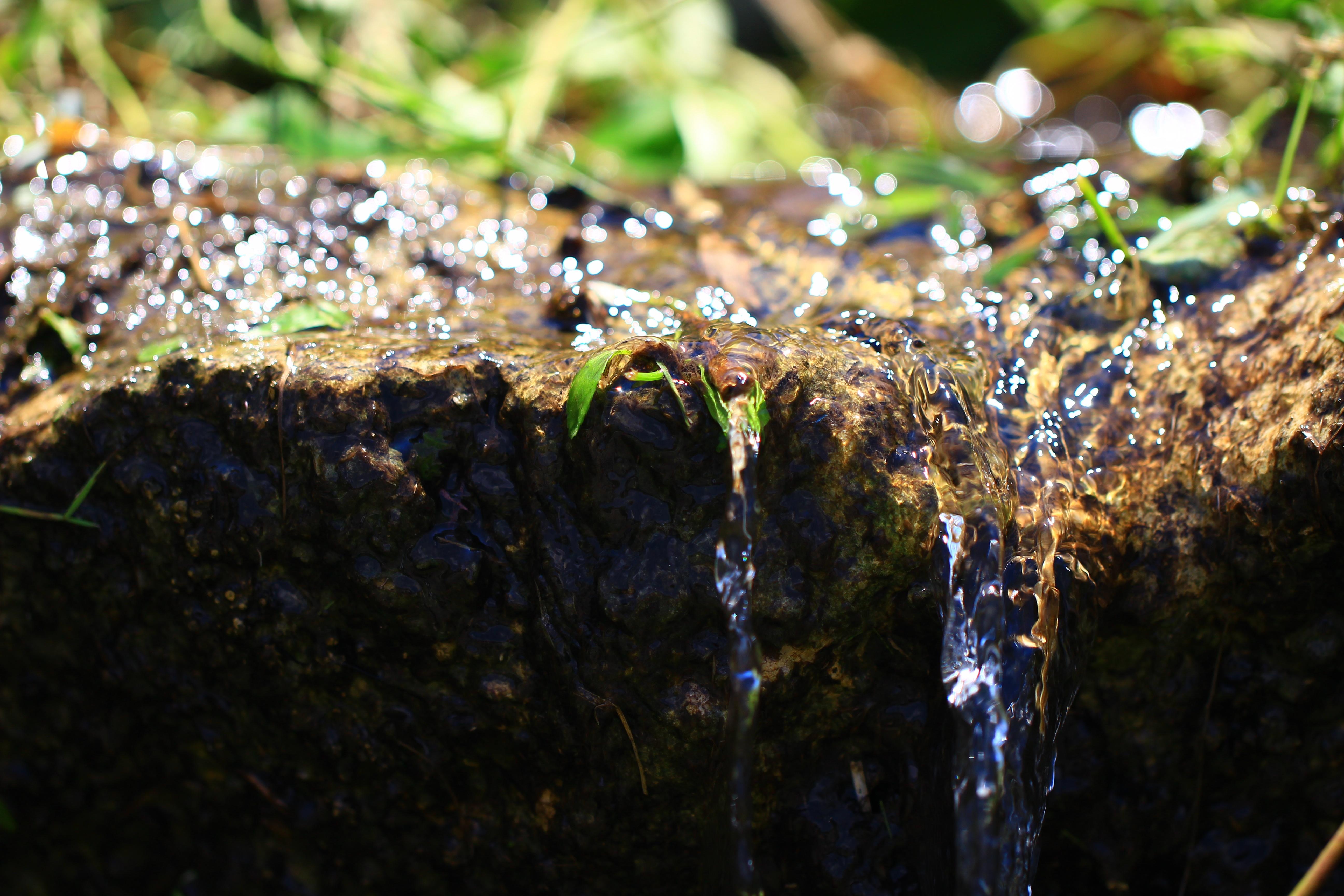宮古島の湧水(ダム資料館) - IMG_7535