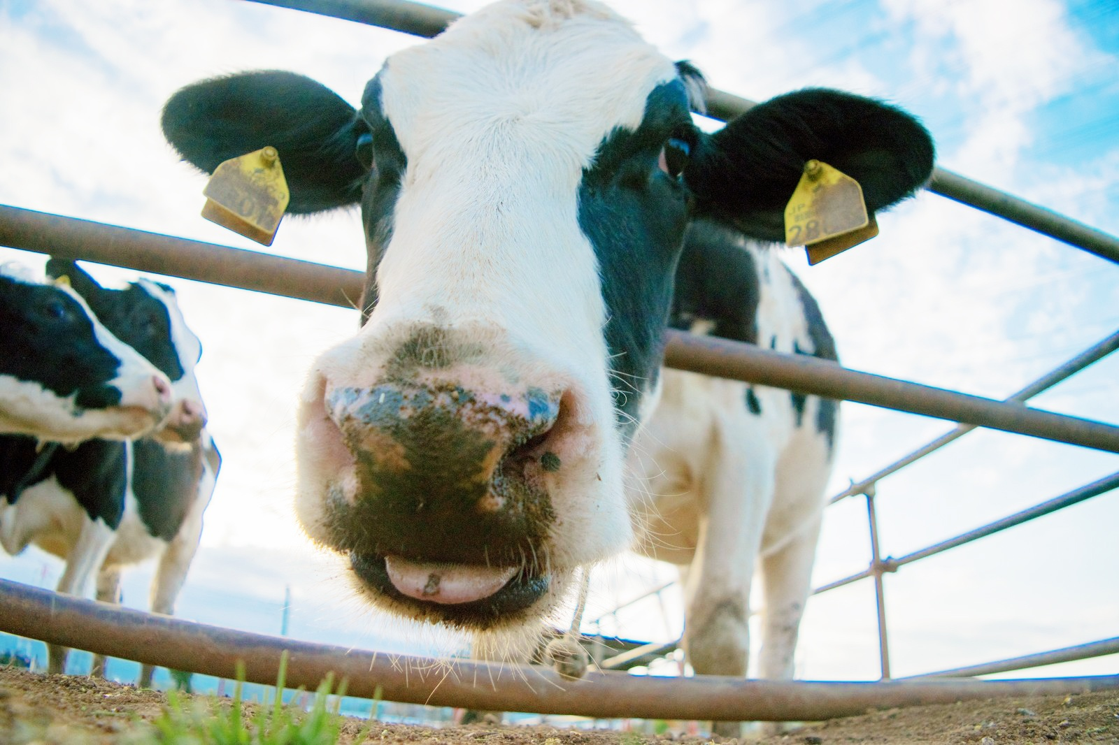 宮古島で牛乳が飲めなくなる日がやってくる・・?宮古島の牛乳事情を考える